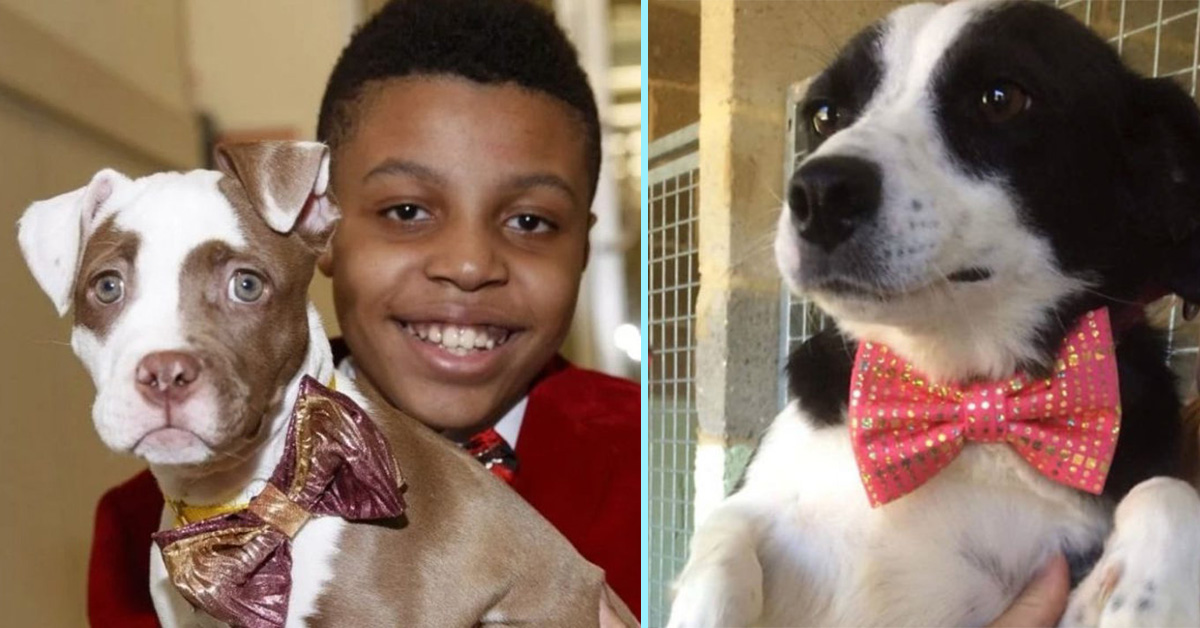 Kind 12-Year-Old Makes Stylish Bow Ties For Shelter Dogs To Help Them Get Adopted